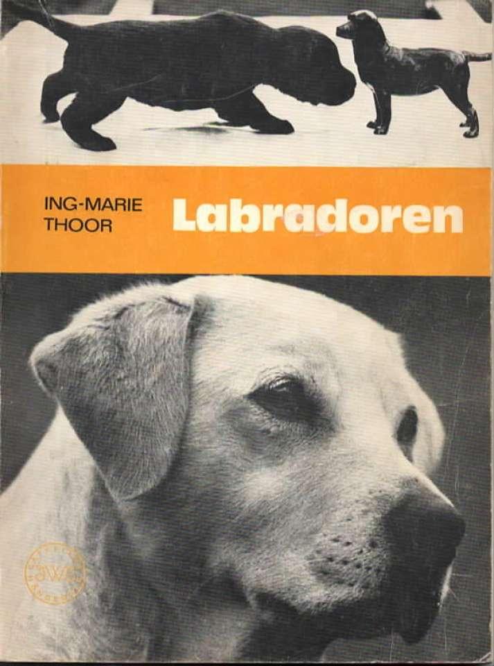 Labradoren