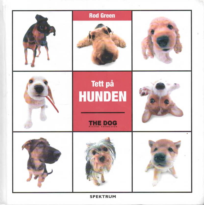 Tett på hunden – the Dog