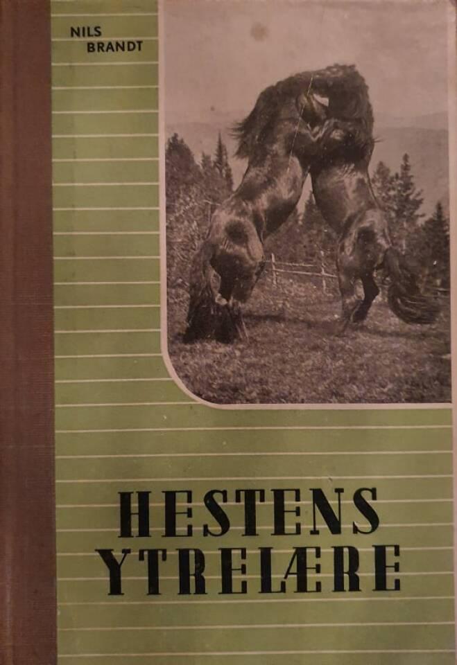 Hestens ytrelære